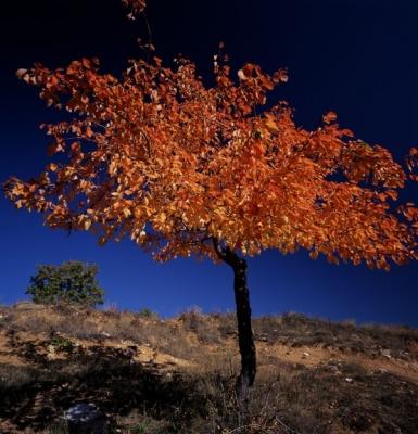 Τοπίο στο Μαυροβούνι