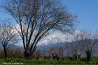Τοπίο Κισσάβου από δρόμο προς Συκούριο-Σπηλιά